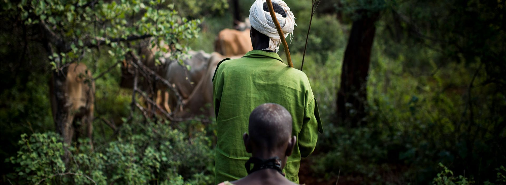 Farmer looking after his livestock in Ethiopia