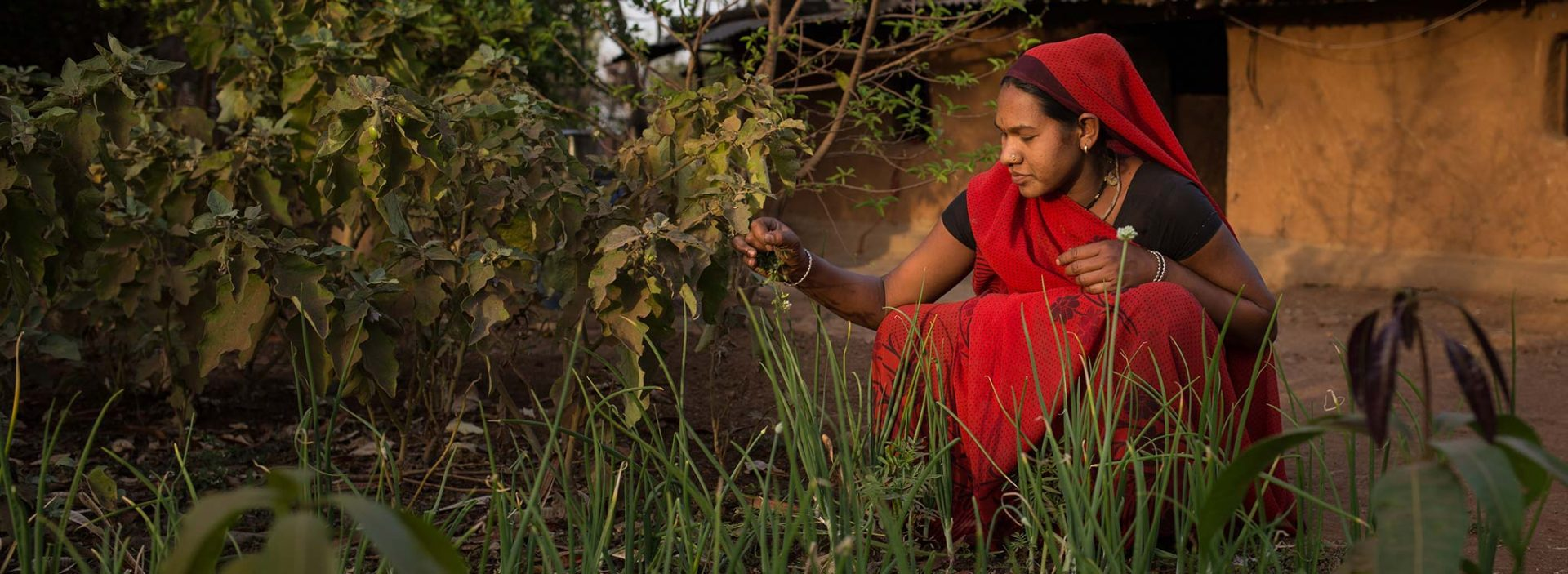 A woman works in a field in India.