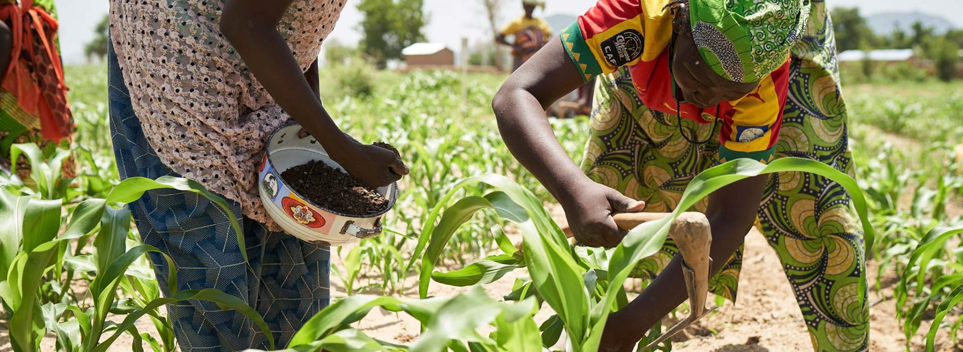 Women tend to their crops at an Action Against Hunger project in Cameroon.