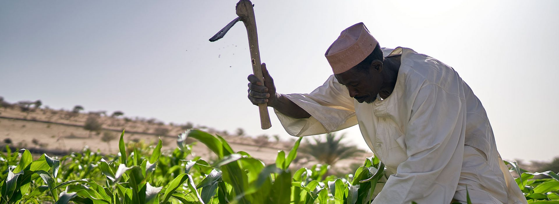 A man works in a field in Chad.