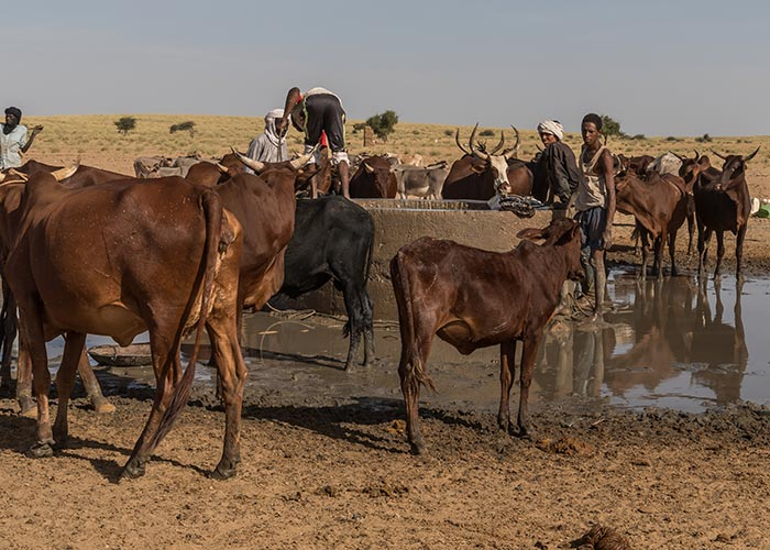 A group of herders in Niger whose livelihoods have been affected by the climate crisis.