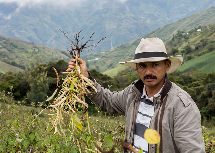 Man standing in fields holding up crops that have died.