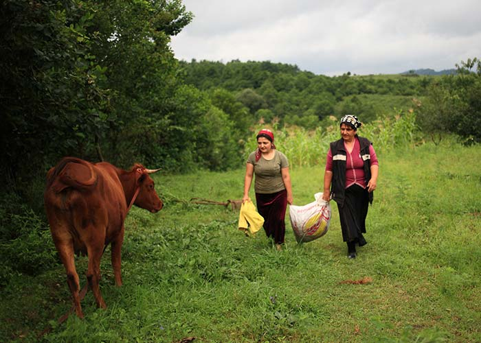 Two woman walk past a cow at an Action Against Hunger project in Georgia.