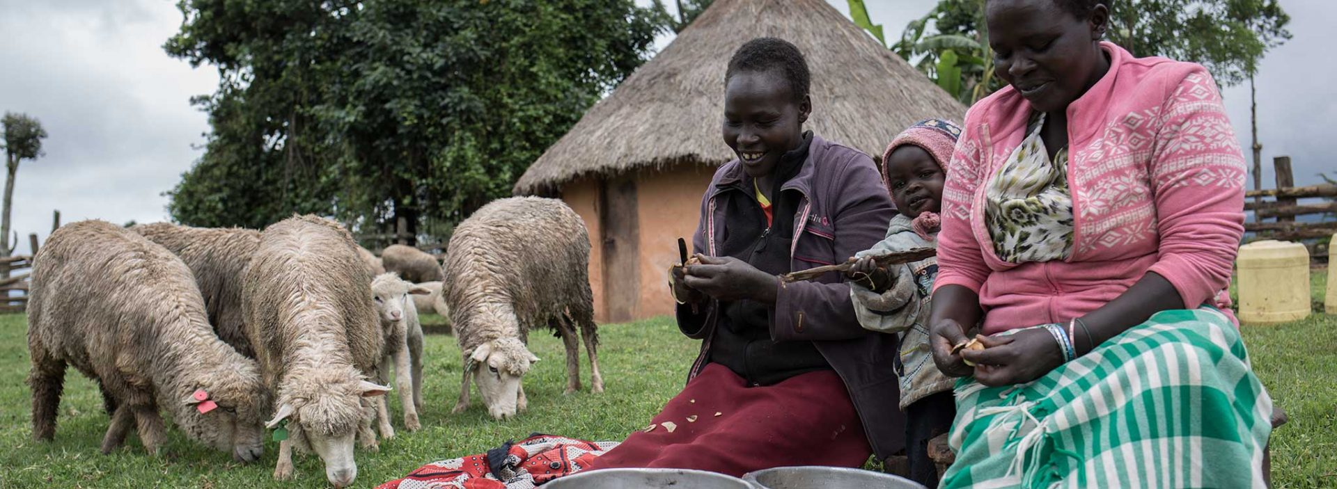 Communities in West Pokot, Kenya, received 17 sheep from Action Against Hunger.