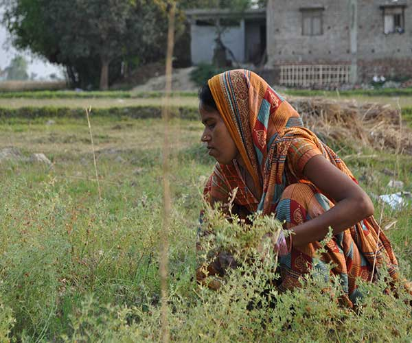 A woman works in a field near an Action Against Hunger project in Nepal.