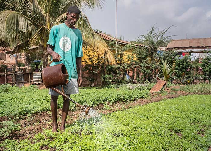 A man waters his field at an Action Against Hunger programme in Sierra Leone.