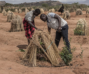 Action Against Hunger staff build water trees in Uganda.
