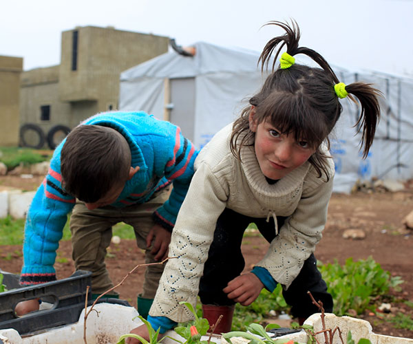 Syrian refugees planting seeds