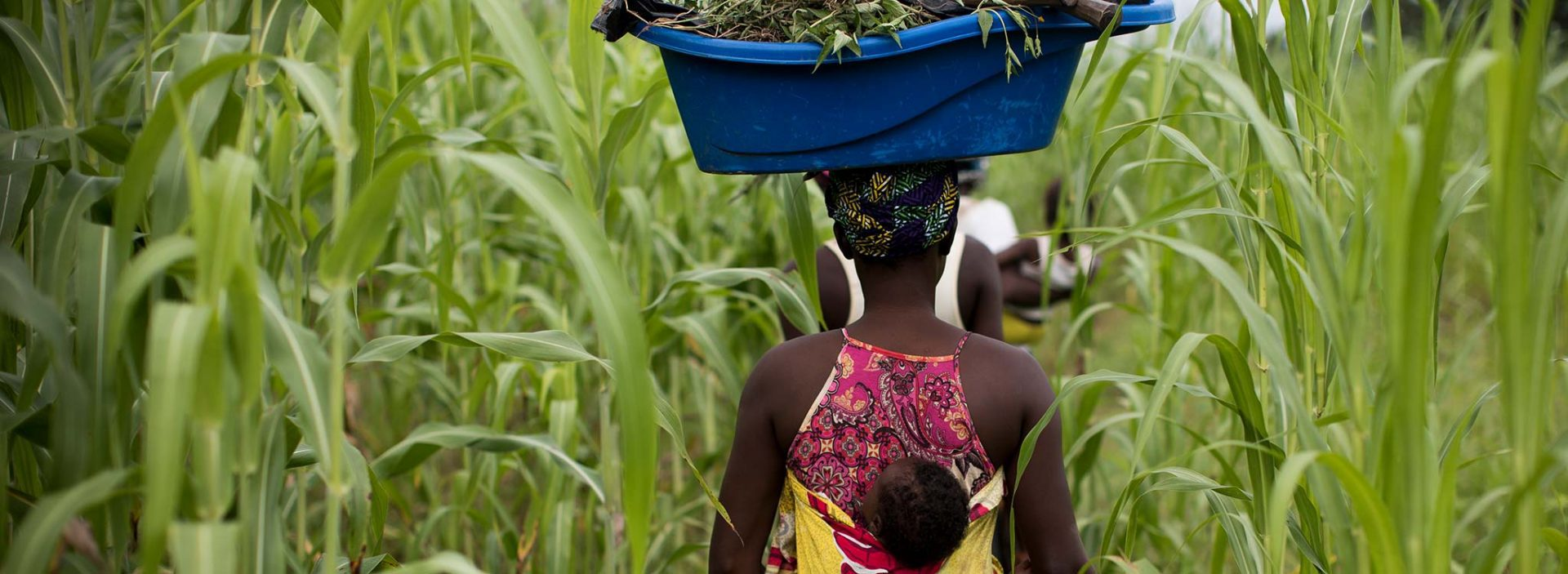 A woman walking through a field at an Action Against Hunger project in Mali.