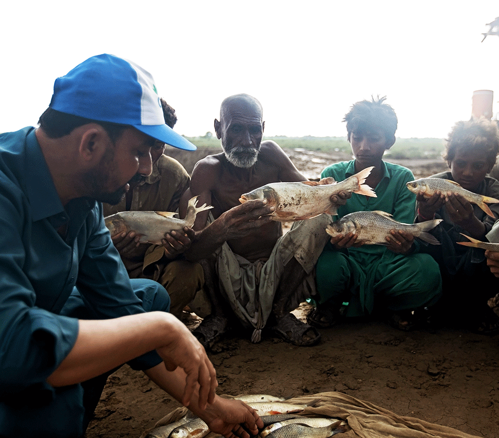 Abdul Malik is a Technical Officer at an Action Against Hunger supported Fish Farm in Pakistan