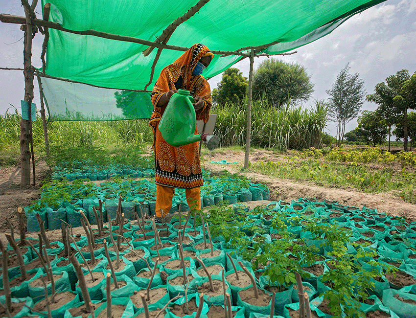 Woman watering crops as part of training in farmer field school supported by Action Against Hunger in Pakistan