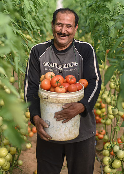 A man carries tomatoes in the Occupied Palestinian Territories.