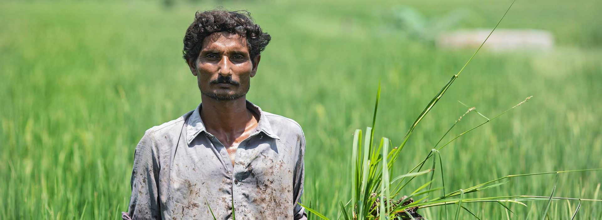 30-year-old Abdul received crop training from Action Against Hunger.
