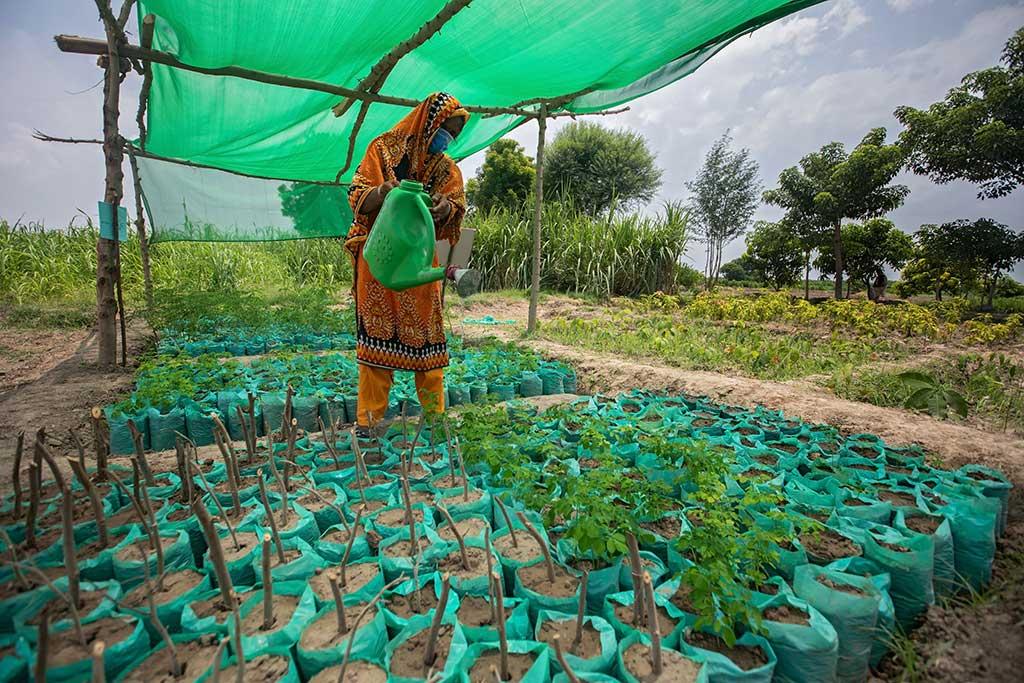 A kitchen garden project in Pakistan.